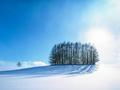 如何拍好银装素裹的世界 雪景拍摄要注意的地方