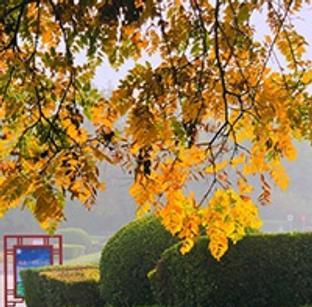 深秋的河东公园