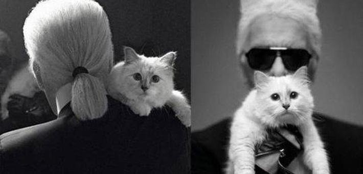 """""""老佛爷""""2亿遗产继承人是只猫?"""