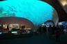原来你是这样的国家海洋博物馆