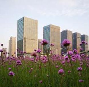紫色花海亮相泰达城市公园