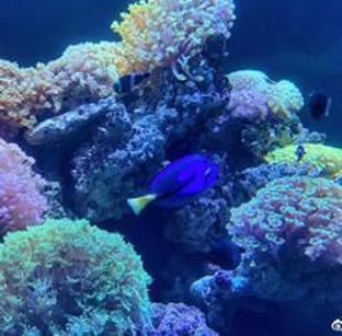 博物馆神奇海洋动物