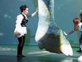 儿童音乐剧《七个大海》让孩子和父母各有收获的口碑好剧