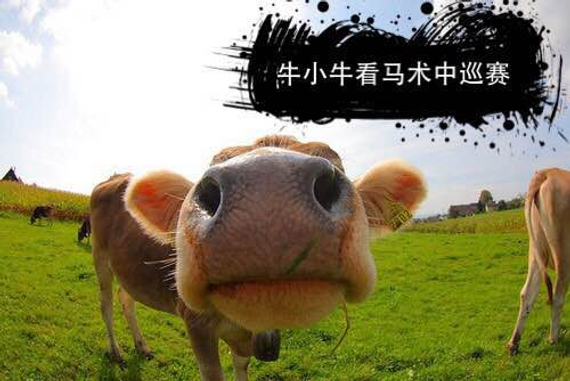 我叫牛小牛