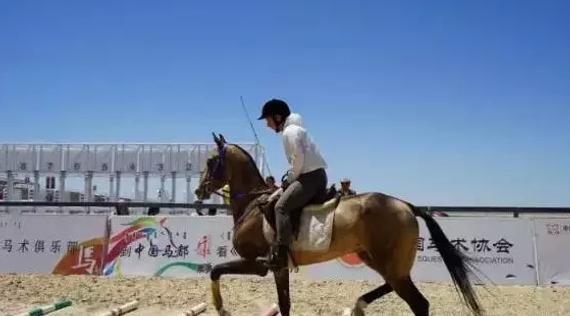 任性骑手带汗血马获双第一