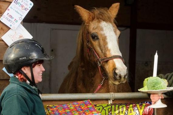 揭秘世界上最长寿的马