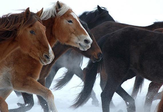 人与动物qovd_草原上的人马情:相伴一生的蒙古马与蒙古人