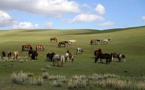 新疆伊犁马