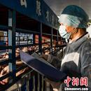 三部門:加強生豬調運監管 嚴管嚴控生豬運輸車輛