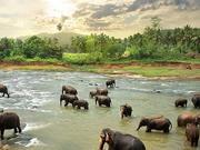 爆炸袭击恐重创斯里兰卡旅游业 影响其对外偿债能力