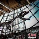 北海道恐龍化石或爲暴龍類 有助揭曉恐龍體型祕密