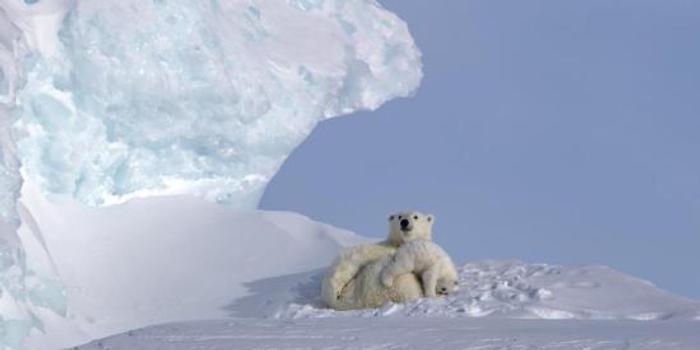 美国拟开发阿拉斯加?;で?直捣北极熊家园