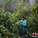 两岸茶文化康养旅游高峰论坛普洱启幕