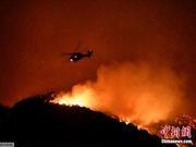 美国加州野火波及名人:施瓦辛格等被迫半夜撤离