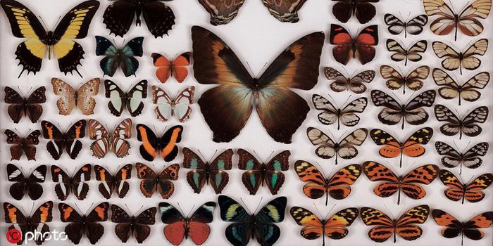 世界最高10亿像素昆虫照 展现昆虫身体惊人细节
