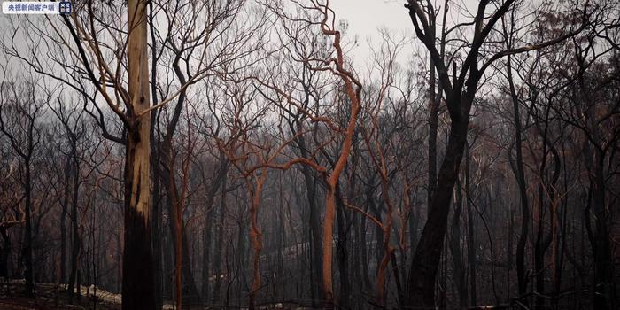 澳大利亚两大世界遗产区过半面积被烧毁