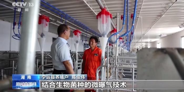 湖南发展标准化养殖 生猪:请好好养我