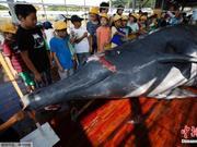 调查:近七成日本人对重启商业捕鲸予以肯定