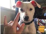 """感人!她领回一只听不见的狗狗,并教会它""""我爱你"""""""