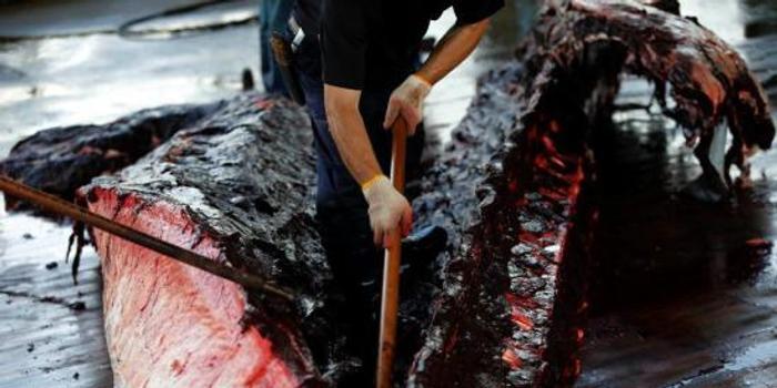 日本退群操捕鲸旧业 血腥《海豚湾》会重演吗?