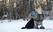 傲娇柴犬Cos《魔兽》巫妖王 一脸呆萌毫无王者之气!