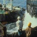 臺籍漁船海上突發傷人事件:菲籍漁工行兇 已致1死