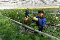 一号文件30条干货:全面深化农村改革 起草宅基地条例