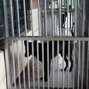 臺灣消防部門培訓搜救犬疑虛報公款 隊員說出隱情