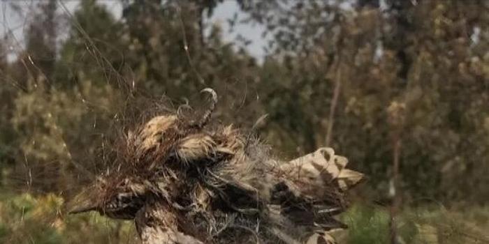 两男子果园内非法粘网捕鸟 被北京昌平警方刑拘