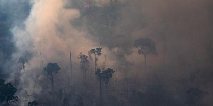 巴西总统府官员:马克龙连巴黎圣母院大火都没阻止
