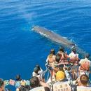 台湾赏鲸船被质疑离鲸太近 业者:减速避免干扰