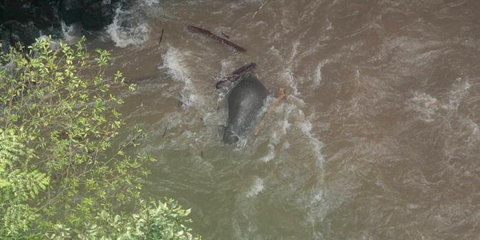 泰国5头大象为救小象惨死 生还大象悲伤或难存活