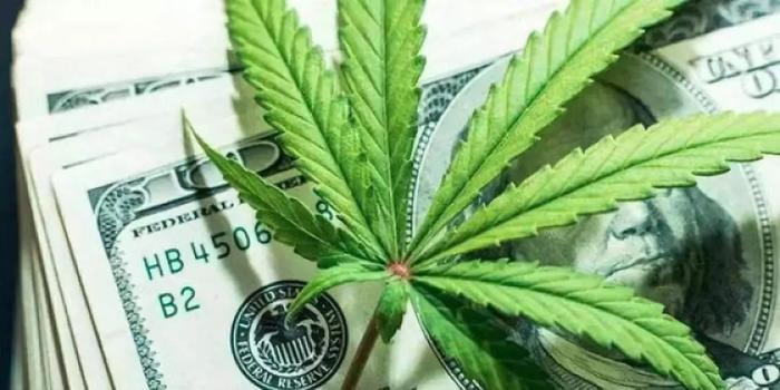 股价翻倍+海外布局:工业大麻第二春? 哪些公司收获季