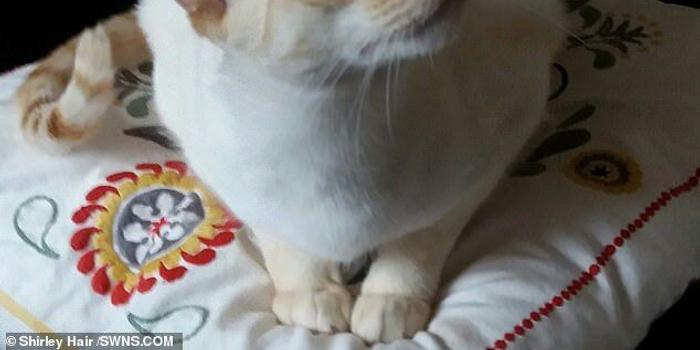 65岁英国奶奶被猫咪抓伤 引发败血性休克险丧命