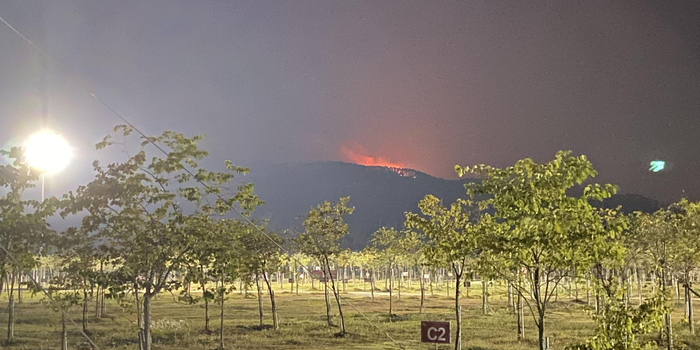 广东佛山山火基本扑灭三线 山顶被烧秃仍有浓烟