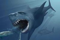 """一路买出并购""""后遗症"""" 新秀丽遭BLUE ORCA大举做空"""