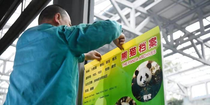 """北京动物园新成员:大熊猫双胞胎""""姐妹花""""来了"""