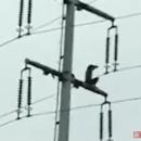 現場:南京一男子爬上高壓電塔 脫衣揮舞觸電墜亡