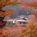 日媒稱日本老式民居受外國遊客歡迎:有文化韻味