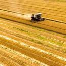 六部門:做好受災地區夏糧收購 助農民減少因災損失