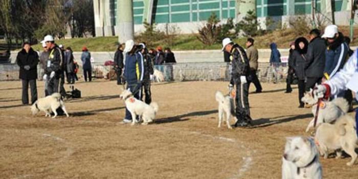 朝鲜举办丰山犬品评会 去年金正恩曾赠文在寅2只