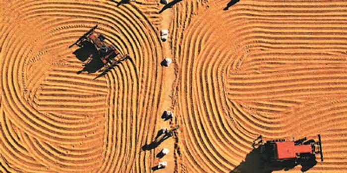白皮書發布 中國處于糧食安全形勢最好時期
