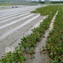 台南市已拨新台币超3200万给农渔畜行业受灾户