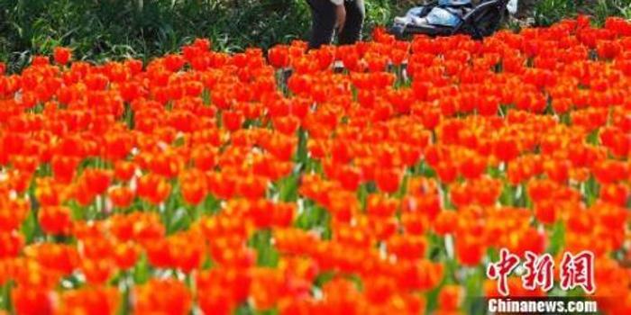 """全国多地提前入春 """"春捂""""到底应不应该?"""