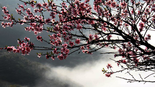 走进林州,迎接一场春意盎然的花季