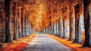 加拿大,一到秋天迷死人的秋天