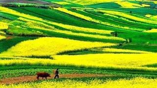 三月赏花到汉中,这里油菜花美的不像话