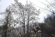 春来巨石情山 相约花样年华