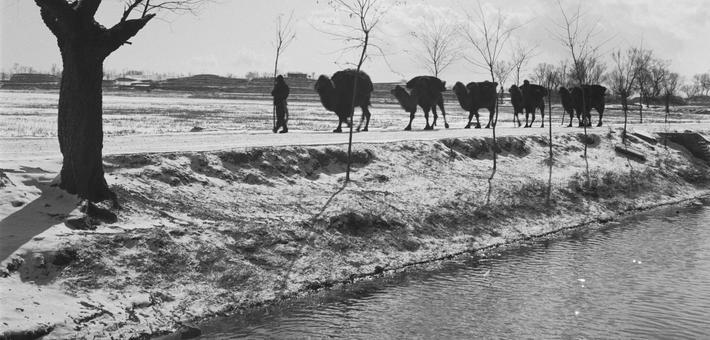 老照片:常見的北方駝隊竟有那么多門道