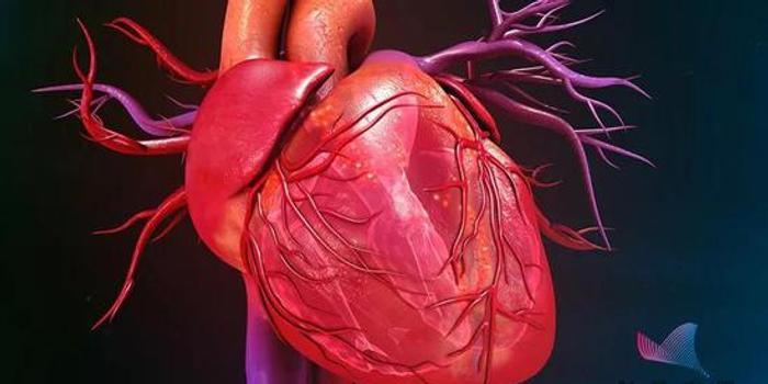 为什么很少听说心脏得癌?心脏究竟最怕什么?